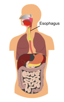 athens gi center - esophagus